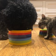 Rainbow Ceramics Pet Bowls  2