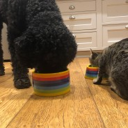 Rainbow Ceramics Pet Bowls  3