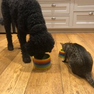 Rainbow Ceramics Pet Bowls  4