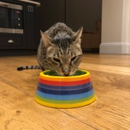 Rainbow Ceramics Pet Bowls  6