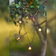 Robin Fairy Lights 5