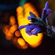 Solar Flickering Flame Garden Torch  4