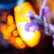 Solar Flickering Flame Garden Torch  5