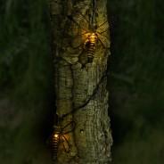 Solar Metal Dragonfly Lights 1
