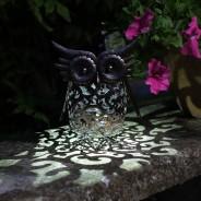 Solar Scroll Owl 1
