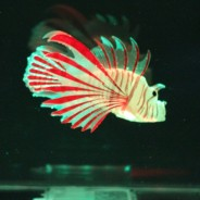 Lion Fish Tropical Mood Light 2