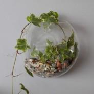 Wall Hanging Glass Terrarium 1