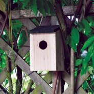 Wild Bird Nesting Box 1