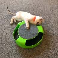 Catch the Mouse Cat Toy