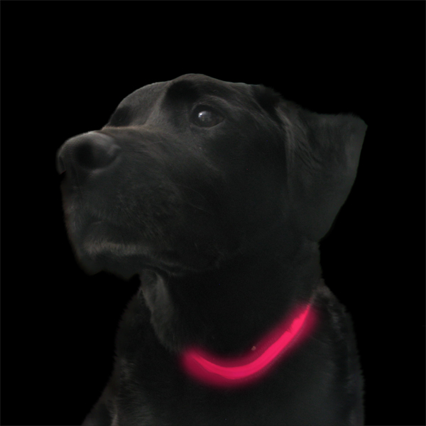 Click to view product details and reviews for Pink Light Up Dog Collar.