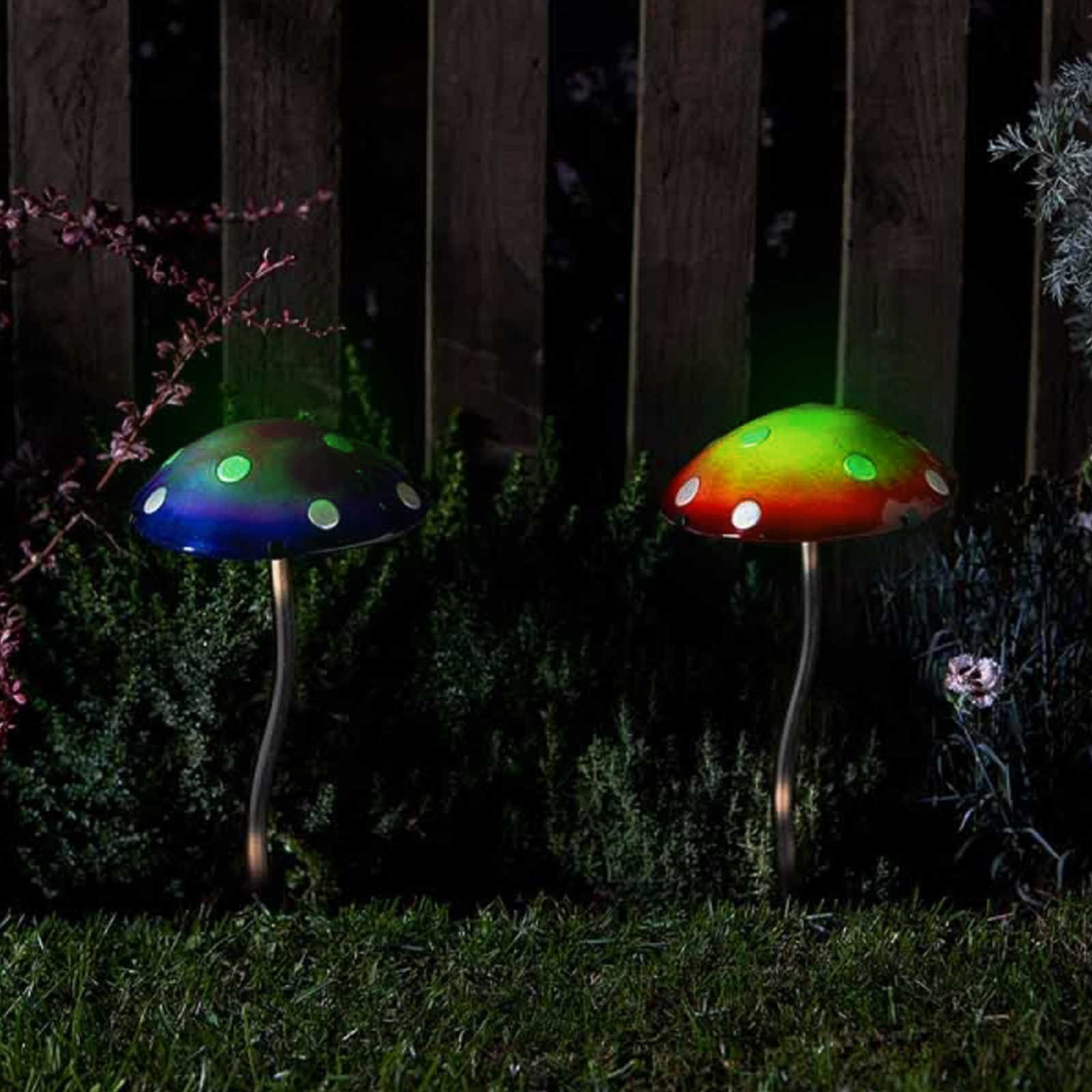 Click to view product details and reviews for Glow Shrooms.