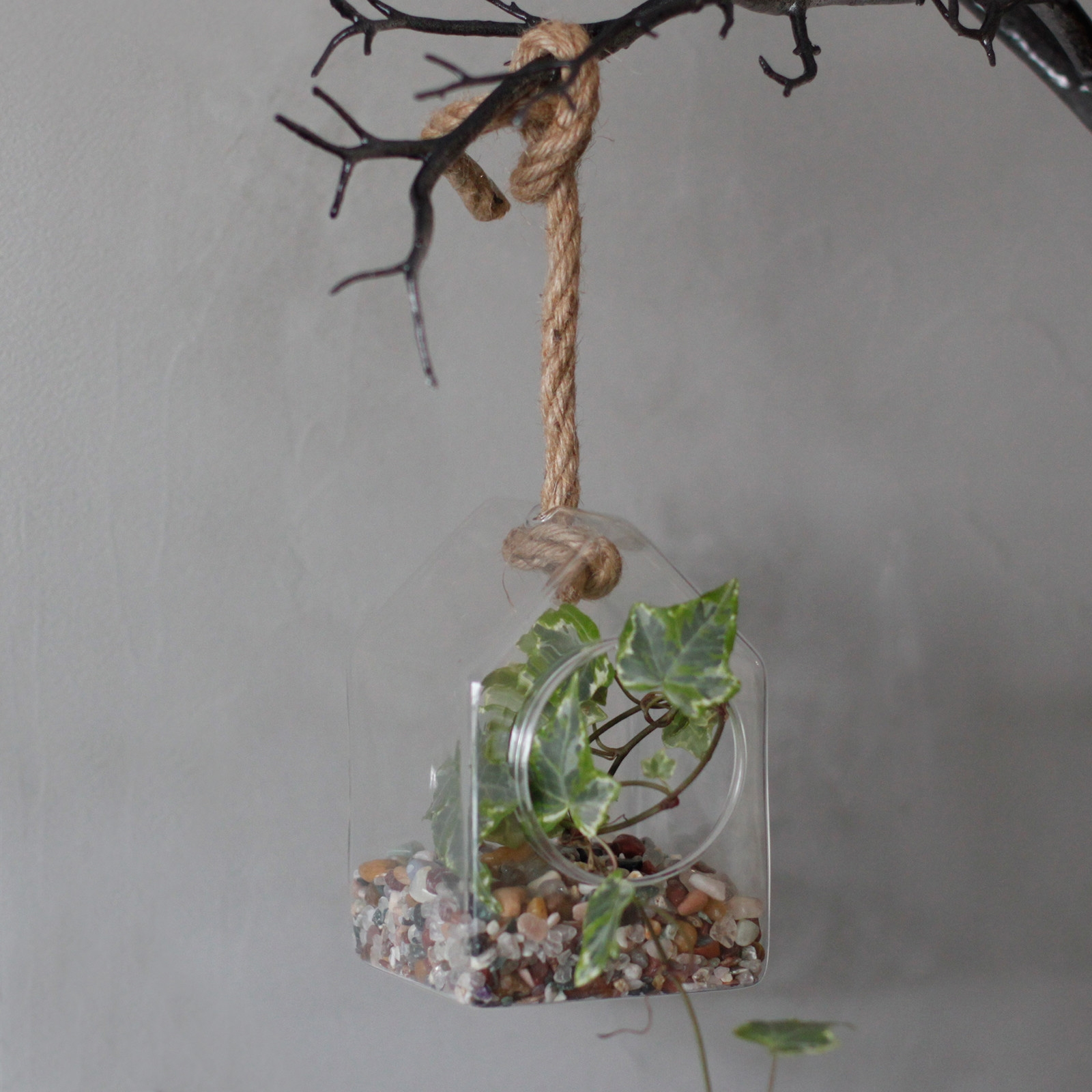 Click to view product details and reviews for Hanging House Glass Terrarium.