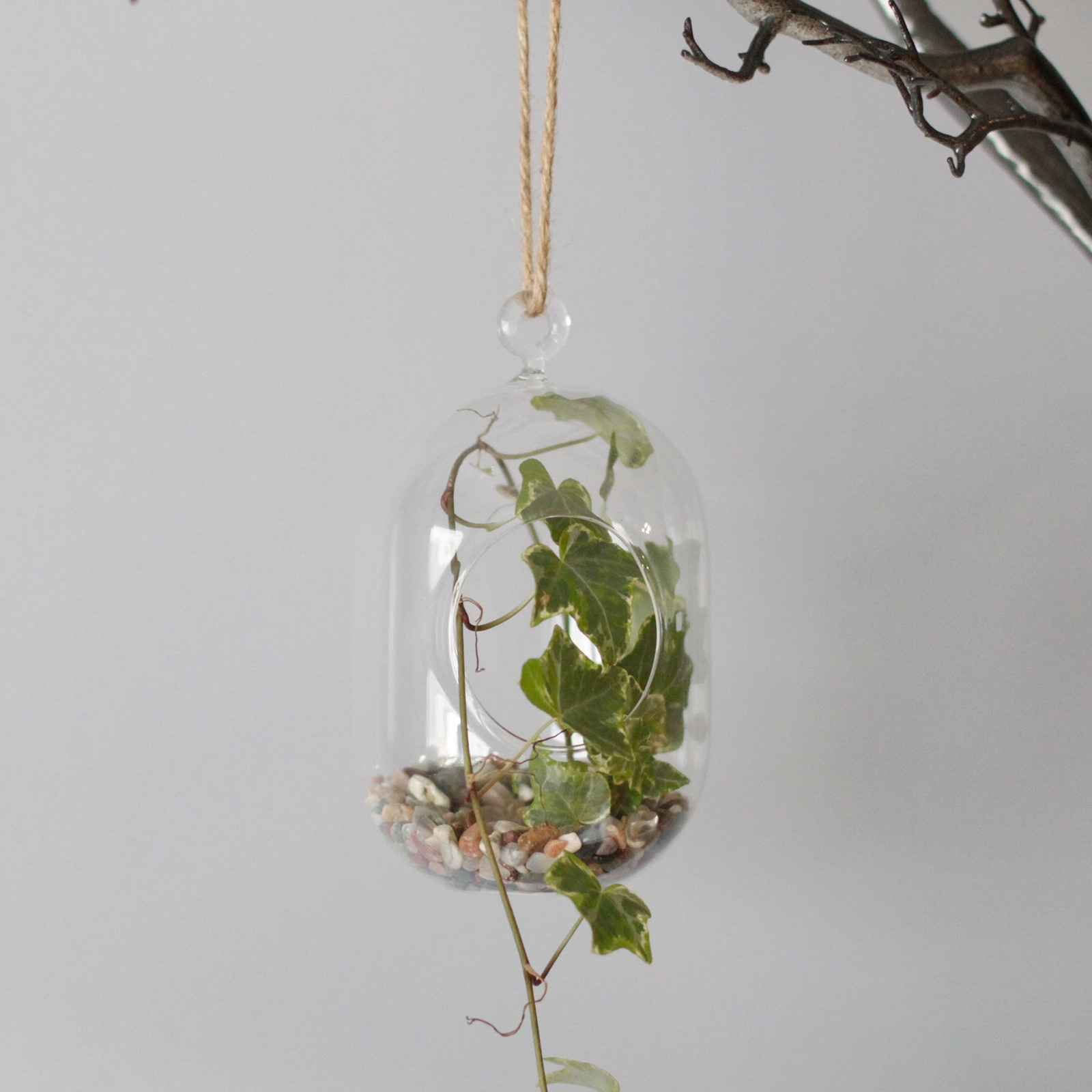 Click to view product details and reviews for Hanging Oval Glass Terrarium.