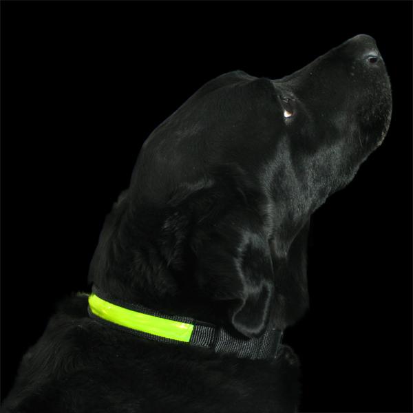High Visibility Dog Collar