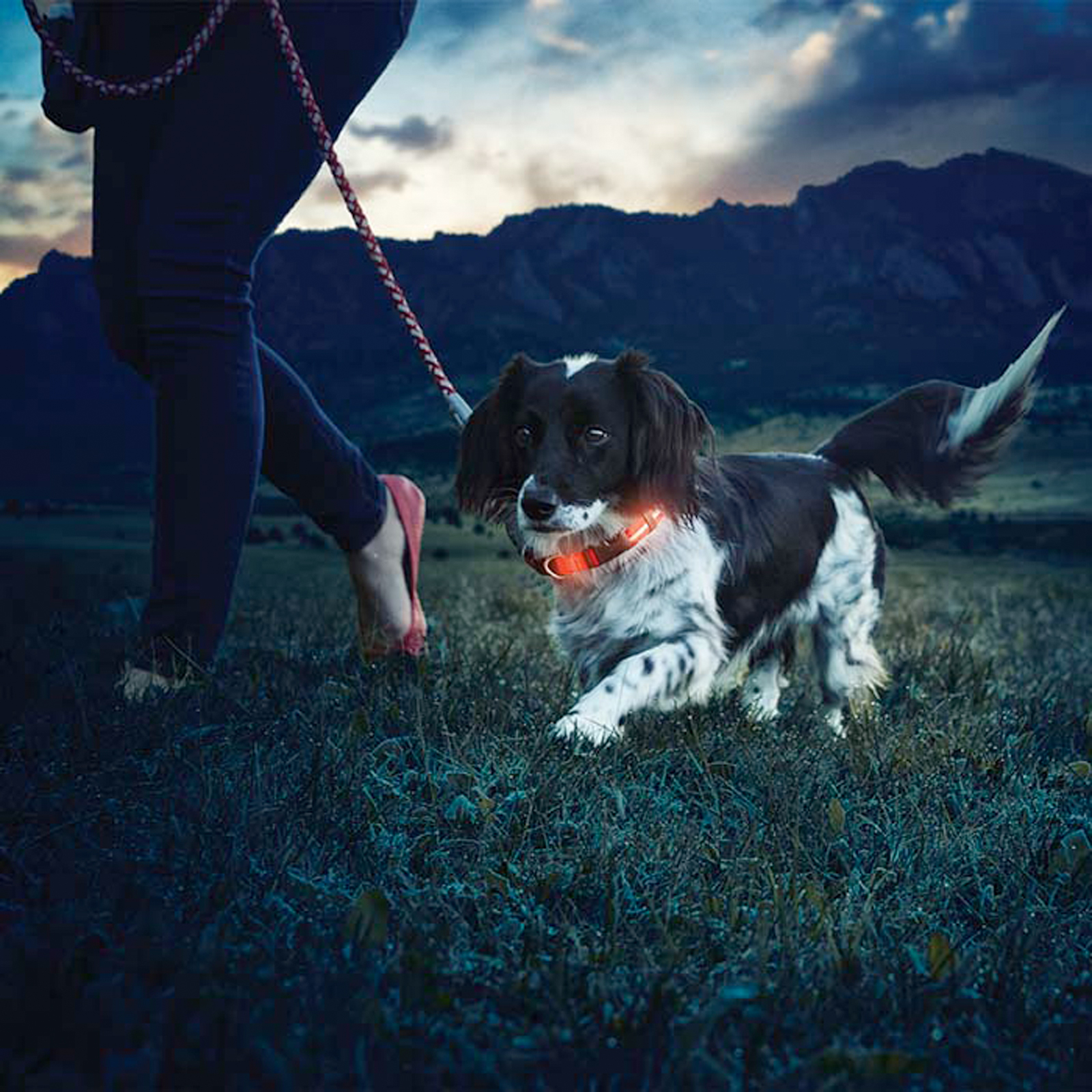 Click to view product details and reviews for Night Dawg 2 Dog Collar.