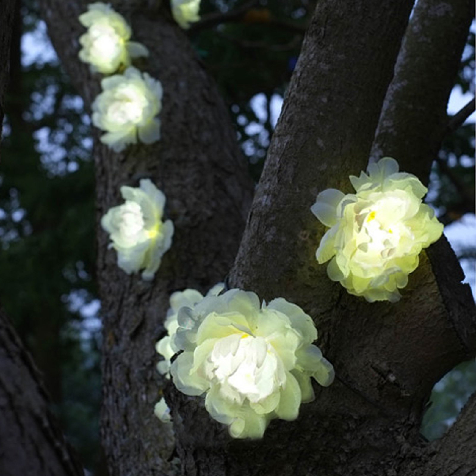 Click to view product details and reviews for Solar Rose Stringlights.