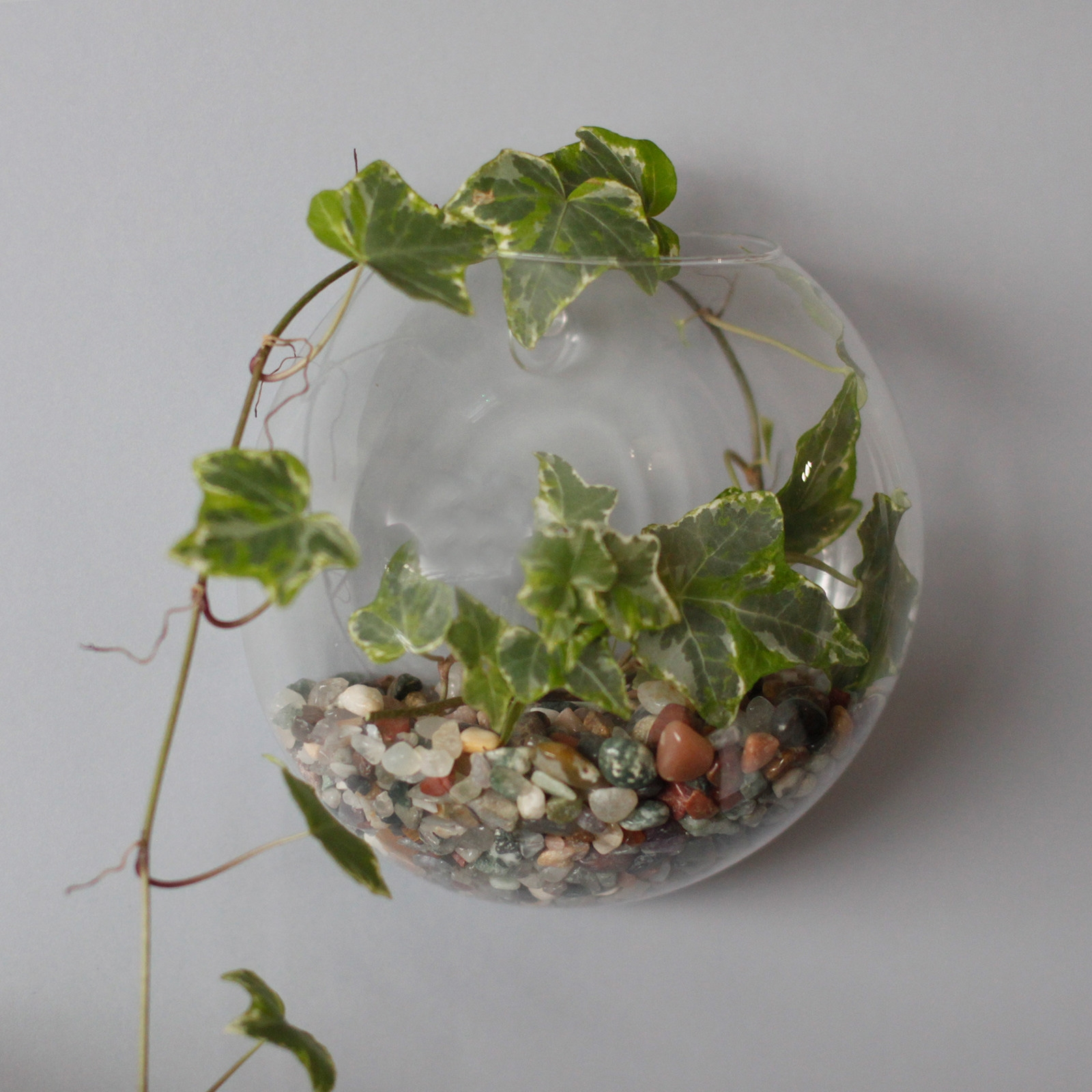 Click to view product details and reviews for Wall Hanging Glass Terrarium.